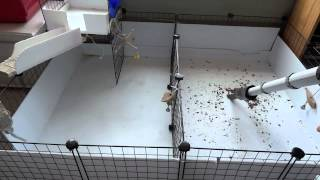 How To Clean/Use Fleece In A C&C Cage