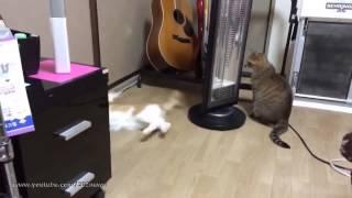 Смотреть онлайн Коты танцуют кошачий вальс на полу