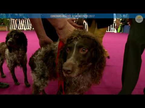 Voir la vidéo : Ring Canins du 05 mars 2017, partie 2