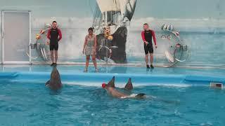 โลมาโชว์ ภูเก็ต Loma Fish  Show Ep01