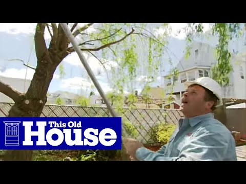 How to Prune a Large Tree - This Old House