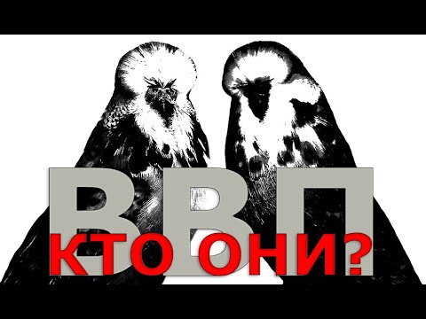 🐥 🐤 Кто такие выставочные волнистые попугаи и как их приручать