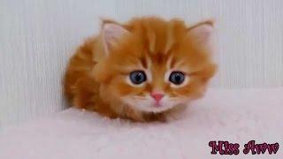 Video Hewan Lucu Untuk Anak-anak Lucu Kucing Lucu Video Kucing Youtube Video Hewan Lucu
