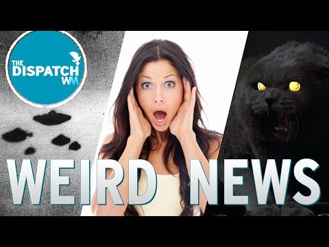 UFO 'Proof', Yukon Denies the D & Zombie Cats: The Dispatch Ep. 12