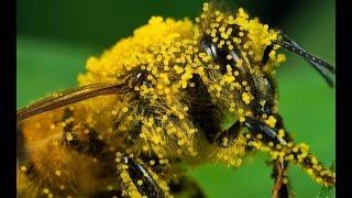 Смотреть онлайн Документальный фильм о пчелах России