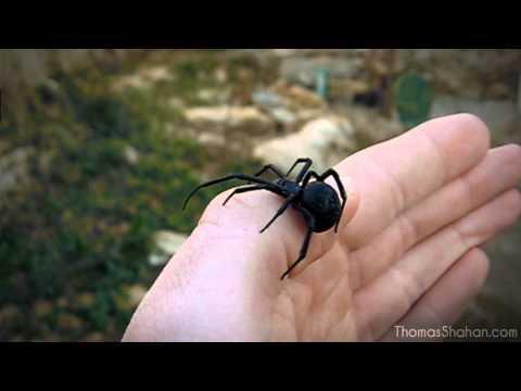 » Free Watch Black Widow