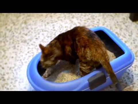 Bandeja Sanitaria para gato Berto- Zoomalia