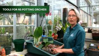 How to Re-Pot an Orchid