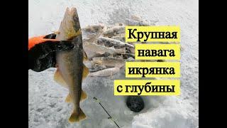 Зимняя рыбалка навага в архангельске