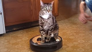 Roomba Animals! Funny Videos of Pets and Roombas 🐶🐱