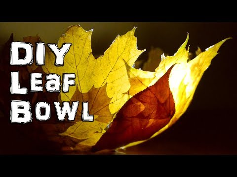 What to do with Autumn Fall Leaves