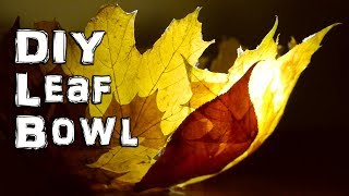What to do with Autumn Fall Leaves - Video Youtube