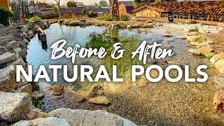 Natural Pools & Swim Ponds in California - No Chlorine or Chemicals - Aquascape System