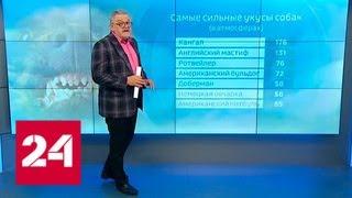 Новый закон вызвал вопросы у российской кинологической федерации - Россия 24