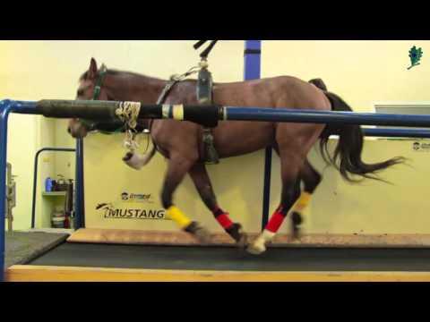 Il sito ufficiale del patogeno cavallo