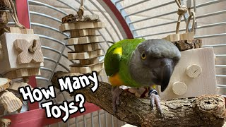 How Many Toys Does a Parrot Need? Arranging the Cage