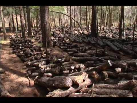 Mushroom Farming Ozark Forest Shitake Mushrooms The