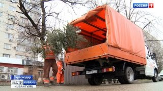 Как лучше избавиться от новогодней елки?