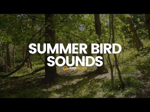 Download Sound Effect Birds Video 3GP Mp4 FLV HD Mp3 Download