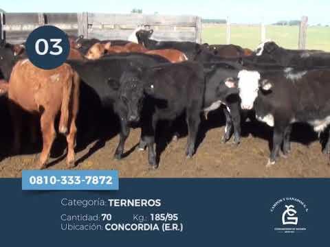 Machos - Concordia ER