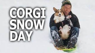 CORGI DOG'S 1st TIME SLEDDING IN SNOW - Life After College: Ep. 460