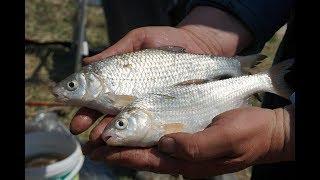 Рыбалка с берега на поплавок в астраханской