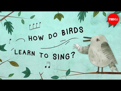 Why are Birds so Good at Singing?