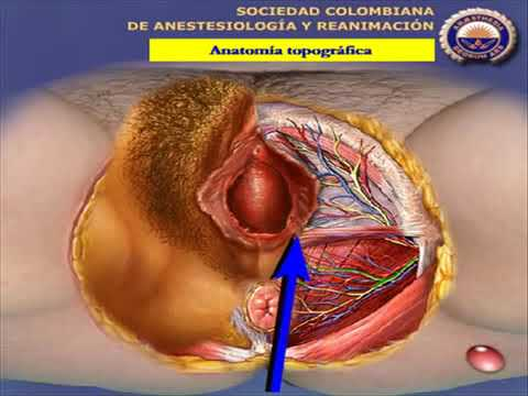 Erezione dei muscoli del pene