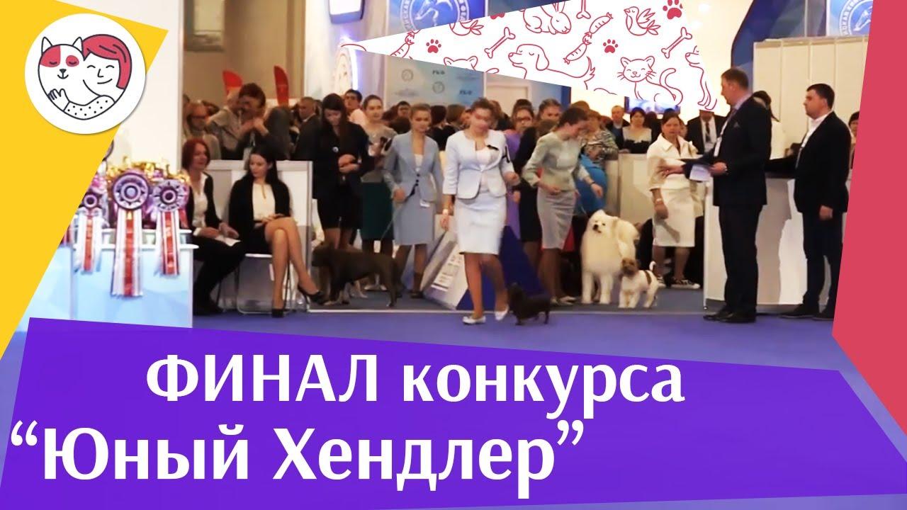 Финал конкурса юного хендлера 19 03 17 на Евразии ilikepet