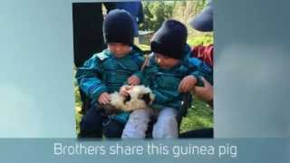 preview picture of video 'Family Farm Tour in the Southern Highlands NSW Australia'
