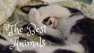 ПОПРОБУЙ НЕ ЗАСМЕЯТЬСЯ   Смешные Приколы с Животными,  funny animals