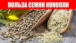 Семена Конопли Помогут Укрепить Иммунитет