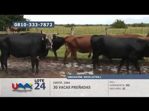 Lote Vacas preñadas en Goya (Corrientes)