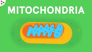 Mitochondria - Powerhouse of the Cell | Don't Memorise