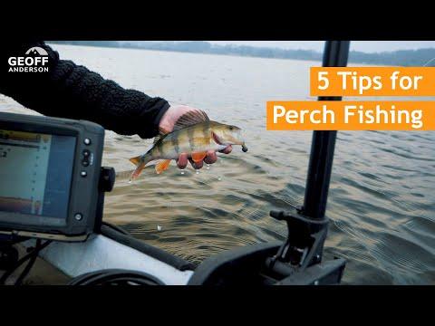 Tips og tricks til aborrefiskeri med jig