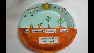 Seed Germination Project | School Model | Science Exbhition | Model Of Science
