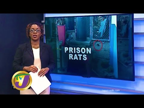 TVJ News: Spanish Town Prison Overrun by Rats - January 17 2020