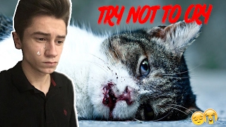 Уродливый кот | TRY NOT TO CRY CHALLENGE | ПОПРОБУЙ НЕ ЗАПЛАКАТЬ ЧЕЛЛЕНДЖ