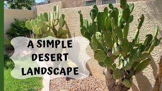 A Simple Desert Landscape Garden (Cactus Planted In Ground)