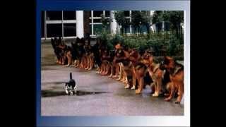 Немецкая овчарка.wmv