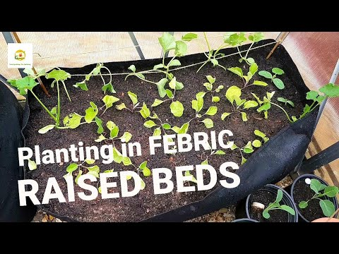 , title : 'Planting cucumbers, melons, zucchini, gourds, eggplants and bell peppers in my fabric raised beds