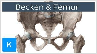 Gambar cover Becken und Femur - Knochen - Anatomie des Menschen | Kenhub