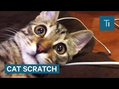 Here's what to do if you get scratched by a cat