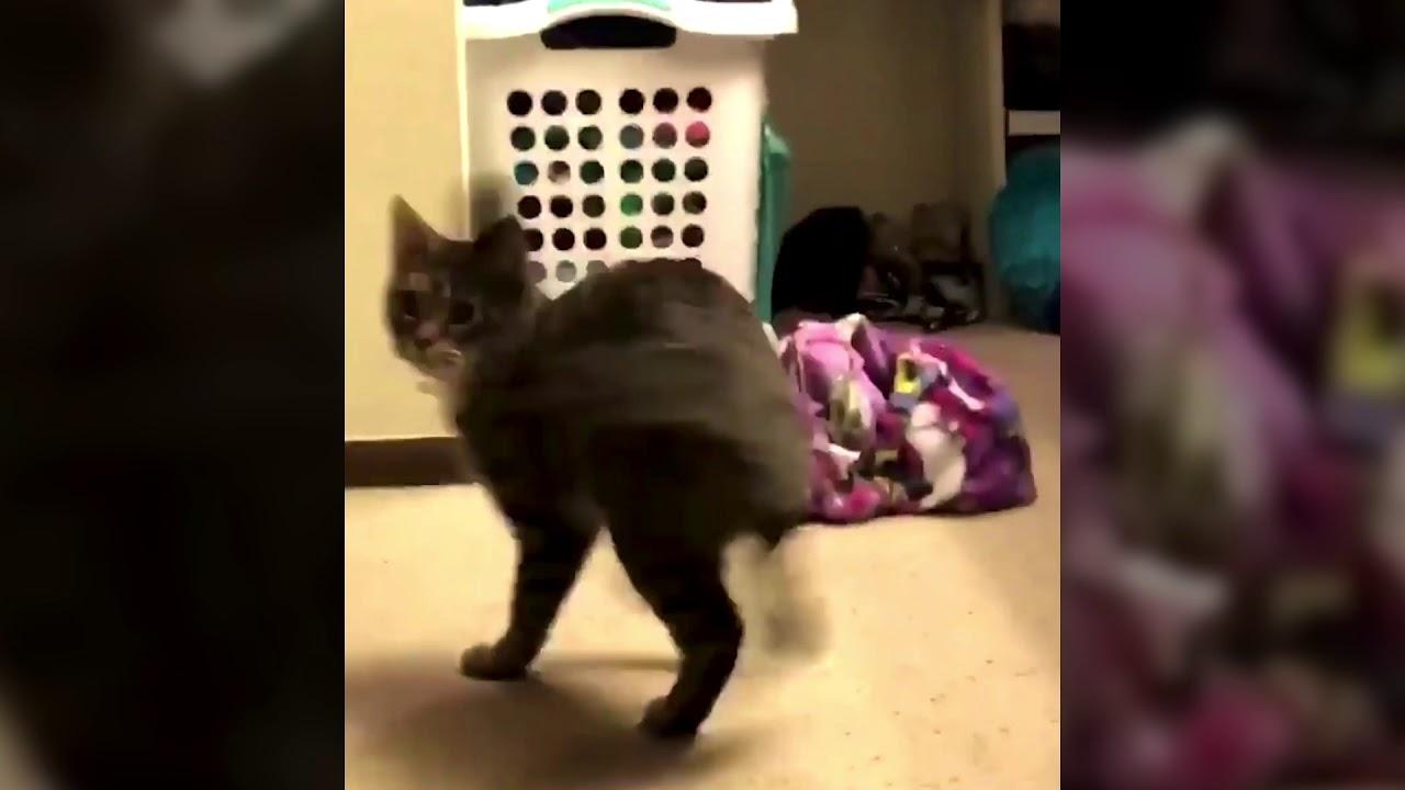 Девушка сломала систему своей кошке фото
