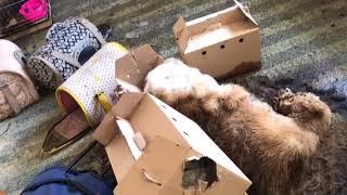 79마리의 개 사체와 80여 마리의 살아남은 개들이 구조된 천안의 한 펫숍(영상 동물자유연대 제공) | Kholo.pk
