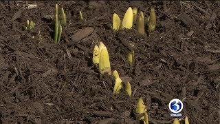 VIDEO: Experts explain best time to plant flowers, plants