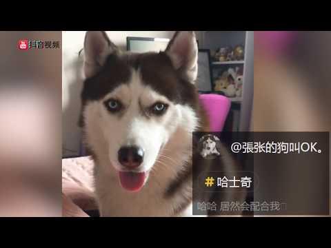 【抖音】熊貓來了!2018最新動物視頻合集 (10)TIK TOK Panda 超治愈系