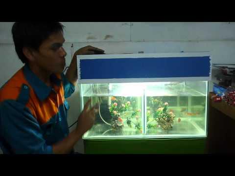 Video memelihara ikan di aquarium by ikhsan