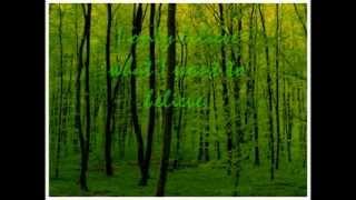 The Dandy Warhols Green lyrics