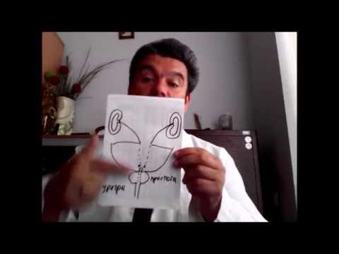 Как делать массаж простатита в домашних условиях видео